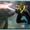 snorkel-with-manatees-1.jpg