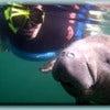 snorkel-with-manatees-3.jpg