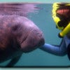 snorkel-with-manatees-2.jpg