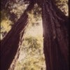 California_-_Redwoods,_Colwell_Redwood_State_Park_-_NARA_-_543449.jpg