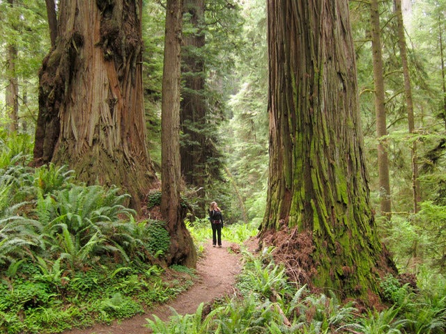 See Giant Redwoods on a Muir Woods, Giant Redwoods & Sausalito Trip