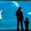 Vancouver Aquarium Marine Science Center_3.jpg