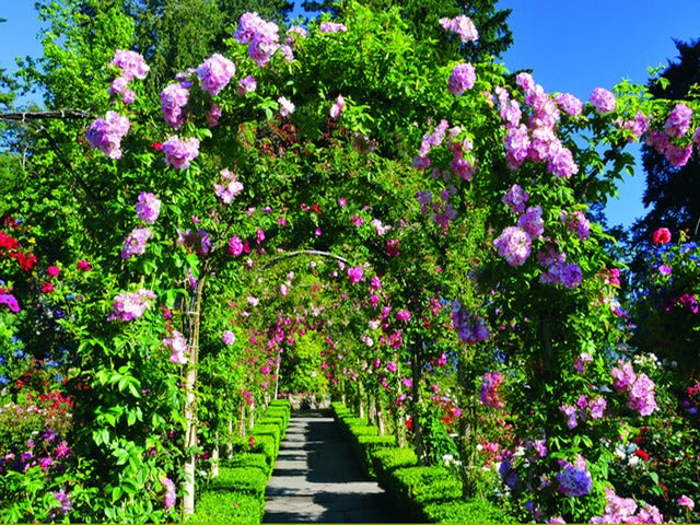 Explore the Sunken Garden on a Butchart Gardens Tour