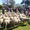 Tobruk Australian Outback Experience_2.JPG