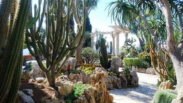 Monaco for Jardin exotique monaco