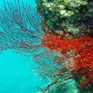 Exploring Australia's Great Barrier Reef
