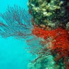 Great Barrier Reef [1].jpg