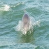 Clearwater Dolphin Watching Tour_1.jpg