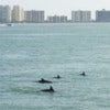 Clearwater Dolphin Watching Tour_3.jpg