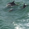 Clearwater Dolphin Watching Tour_2.jpg