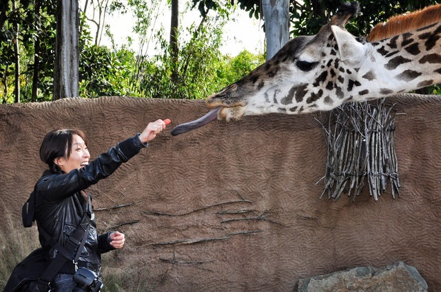 Experience a Wild Day at the San Diego Zoo
