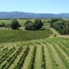 wairau-vineyards.jpg