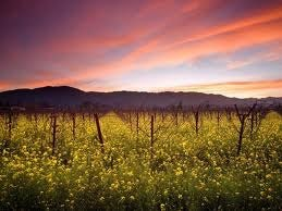 Explore the World Famous Napa Valley