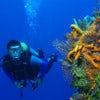 Diving [1].jpg