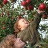 Applepicking1.jpg