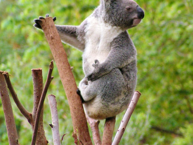 Enjoy a Sydney Blue Mountains Nature and Wildlife Day Tour