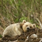 in the Great Bear Rainforest