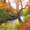 fall colour path.jpg
