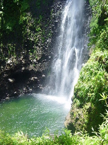 Your Perfect Wedding Awaits in the Dominica