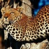 banner-south-africa-attractions.jpg