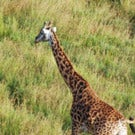Tips on Finding Cheap Guided Tours in Africa