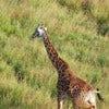 Serengeti Balloon Safari [3].jpg
