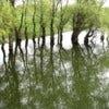Danube Delta [2].jpg