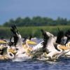 Danube Delta [3].PNG