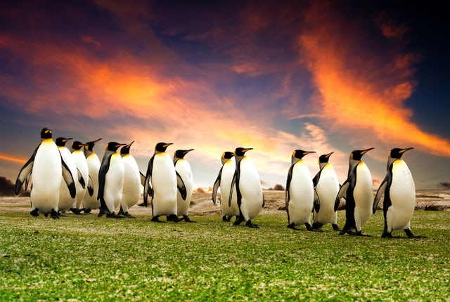 Explore the Outer Falkland Islands