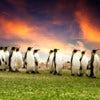 Falkland Islands.jpg