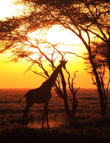 Top Vacation Destinations in Africa