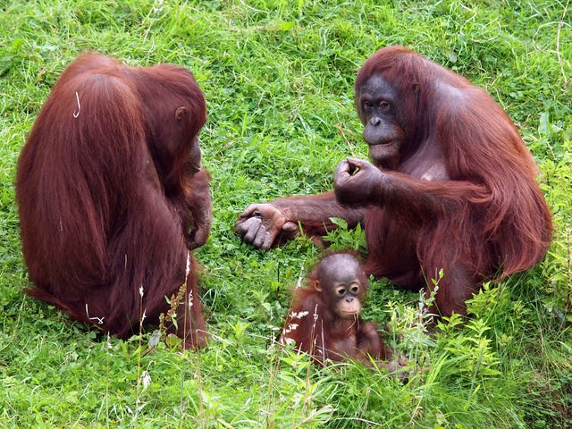 Discover and array of wildlife on a family adventure in Borneo