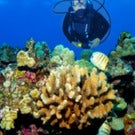 Top 5 Phenomenal Scuba Diving Destinations In The World