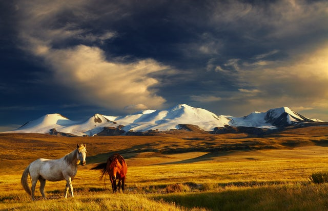 Embark on a sunset ride in Khan Khentii, Mongolia
