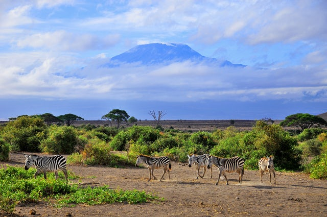 Enjoy the flora and fauna with the majesty of nature at Mt. Kilimanjaro