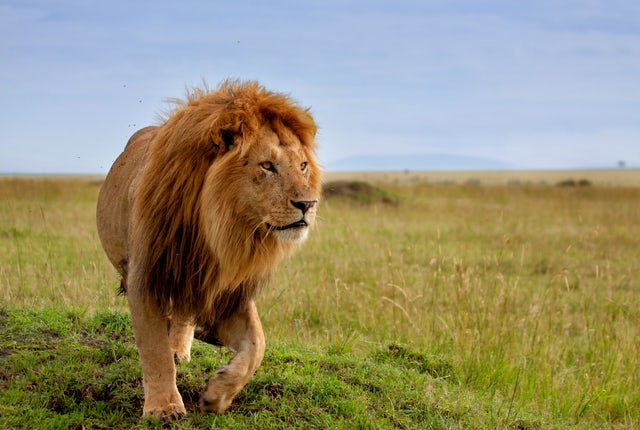What's a Safari like in Kenya?