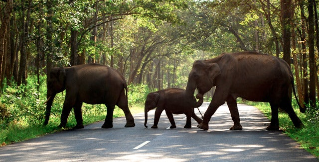 Bandipur-Elephants.jpg