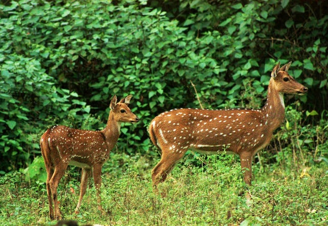 Get up close with the wild in Karnataka