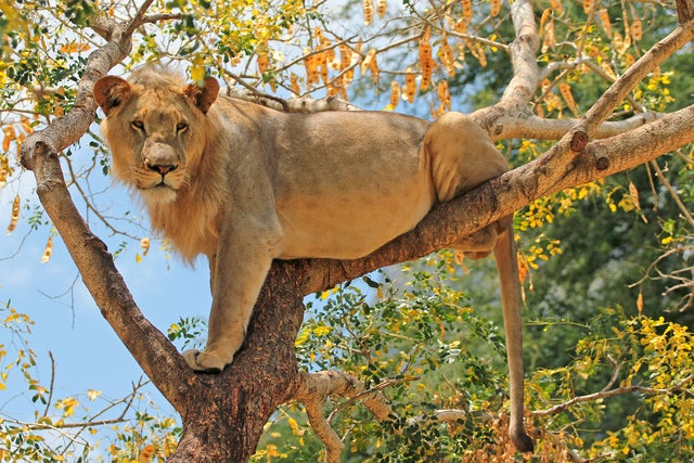 Top 5 Safari Adventures in Tanzania