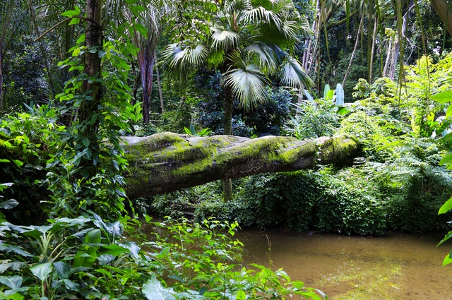 Discovery Coast Atlantic Forest Reserves you gotta go here