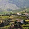Alto Douro wine region in Portugal.jpg
