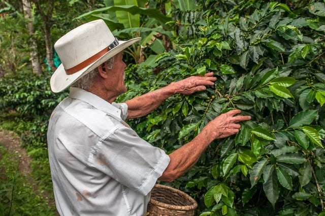 Coffee Cultural Landscape of Colombia