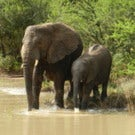 South Africa Carefree Journeys Itinerary Now Available