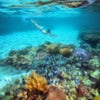 A woman snorkeling in the beautiful coral reef with lots of fish.jpg