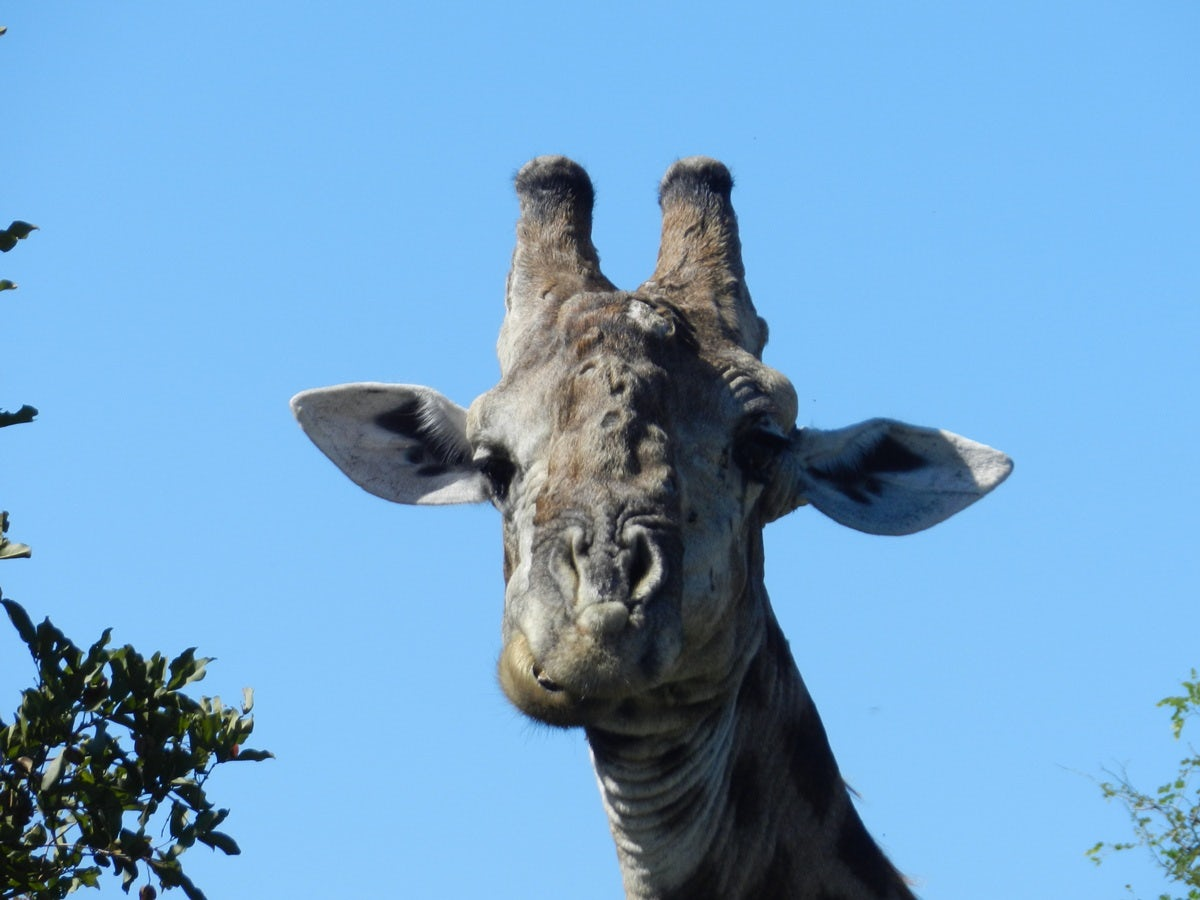 zebra head blue sky.jpg