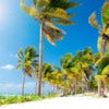 Beach. Caribbean Beach.Mexico.Paradi se Island.Vacation and Tourism concept.Sun and Palms.jpg