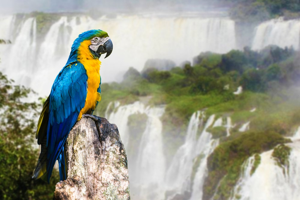 You have to check out Iguazu Falls