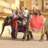 Tourists on elephants.jpg