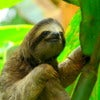 Sloth Costa Rica .jpg