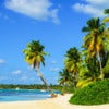 Paradise beach with amazing palm trees entering the azure ocean.jpg